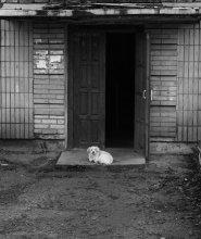 Пёс / ..................
