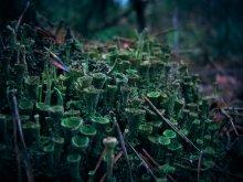 Лесные тайны Декабря / Для Любимой... от лесных жителей