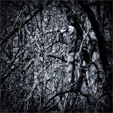 [ Tree Man ] / ...всё-таки ОН существует!!!