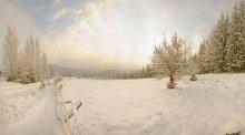 Рождественское утреннее Карпатское / Сказочная погодка, утреннее солнце, окутанное густым туманом или облаками. Не знаю облака или туман, но высота метров 400 точно. Пока поднимались, на разной высоте своя погода.