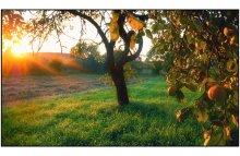 и опять про яблоки... / все тот же сад что и http://photoclub.by/work.php?id_photo=137230&ph_id_auth=3906&page=2#t