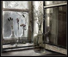 Сухоцветы на окне / ..._______