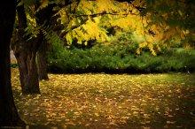 Услышать падающий лист / Из осенних прогулок...