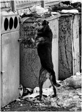 Собачья жизнь / *****