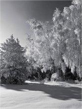 Тяжесть зимнего убора / Мороз и солнце - день чудесный...