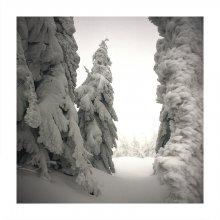 снежное безмолвие / архив. Татры, 2006 год