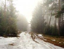Утро в весеннем лесу... / Мартовские туманы. Весенняя хандра....Скудность цвета, но это и есть ранняя весна...
