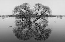 ДНЕВНОЙ СОН / Весна, паводок,отражение...