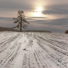 Первый снег / под Витебском