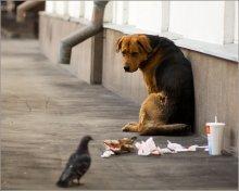 Жил был пес... / Вот такая сценка предстала предо мной на одной из центральных улиц Москвы...