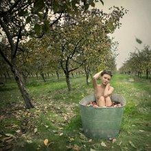 ... осень / идея сфотографировать сезоны года