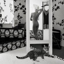 про ...кота / соседки кот