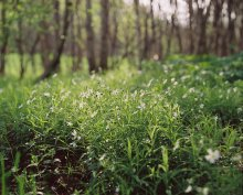 Почти ранее утро в лесу... / Mamiya RZ67 где-то в Бобруйском районе...