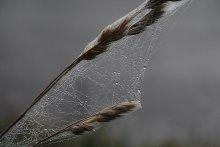 Ловцы снов / Еще один снимок с паутиной.
