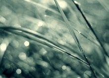 Утро травы / *****