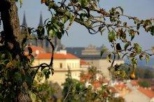 Портрет груши на фоне города / Прага вид на Пражский град с Петршина