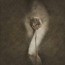 Rose II / просто цветок