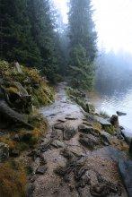 """Тропа / Mummelsee. Schwarzwald (Germany) Озеро расположенное на высоте 1.036 метров. Название порисходит от старинного немецкого слова """"die Mumme"""" - нимфа. Озеро с древности окутано мистическим ореолом и до сих пор поговаривают, что оно наполнено нимфами и русалками."""