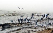 катание на волнах... / очень сильный туман.постоянно намокал объектив и после каждого кадра приходилось его протирать и сушить.