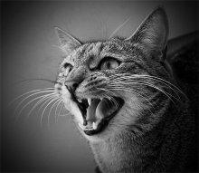 Тигр, которого можно погладить / Бог сотворил кошку дя того, чтобы у человека был тигр, которого можно погладить. Виктор Гюго