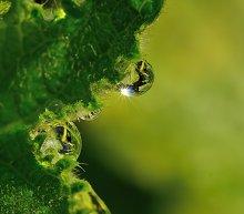 Зелёный взгляд твоих прозрачных отражений... / Утро. Роса на листе...   Зелёные глаза,  Задумчивость и лёгкость,  И вечный огонёк  Непостижимых тайн...   Зелёный взгляд твоих  Прозрачных отражений,  Блуждает в зеркалах,  Играя с тишиной...