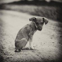 Бродячий пес / .....