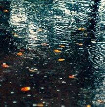дождь / ...........