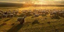 Золотое руно / Golden Fleece