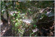 В лесу / В Парке Горен