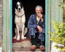 Старые друзья / Не мог пройти мимо этой колоритной пары, и сфотографировал их из-за ворот в режиме телефото...