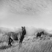 """""""Там, где находится лошадь, там не бывает нечистой силы"""" / Господь, сотворив лошадь, сказал ей: «С тобой не сравнится ни одно животное; все земные сокровища лежат между твоими глазами. Ты будешь топтать моих врагов и возить моих друзей. С твоей спины будут произносить мне молитвы. Ты будешь счастлива на всей земле и тебя будут ценить дороже всех существ, потому что тебе будет принадлежать любовь властелина земли. Ты будешь летать без крыльев и разить без меча…». /Арабская легенда/"""