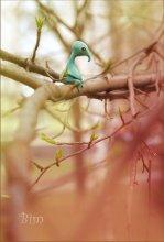 spring spirit 2 / Весной встречаются в уединенных уголках природы
