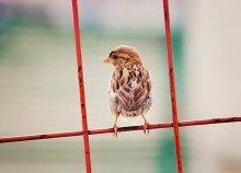 Уарабэй / Милый птиц