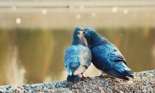Kiss me tender... / Поцелуй меня нежно...