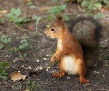 Ну, и где мои орехи? / в парке