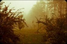 В поисках ёжика в тумане / он гдето там :)