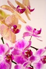 Орхидея / Яркие краски зимой