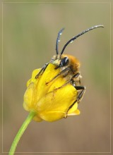 А этот... выпал из гнезда! / Дождь, ветер, маленький пчел.