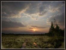 НА КРАЮ ЛЕСА / съёмка заката, использован поляризационный фильтр