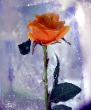лёд и пламень / роза во льду