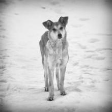 """""""У собак лишь один недостаток — они верят людям."""" / Единственное место в мире, где можно встретить подлинного человека, — это взгляд собаки. © Ромен Гари."""