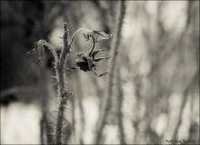 loneliness / и была зима_ и был холод_