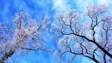 сон о весне / нет никакой обработки цвета, 27.01.2011 Ботанический сад в Санкт-Петербурге