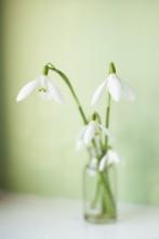 весна / . . .