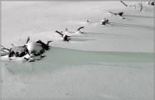 коль зелень снега... / Коль зелень снега есть,  то почему - невидимая мной?  А коли - нет,  то почему  так чувствую ее?