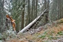 Мишкин лес / Карпаты. Заросляк