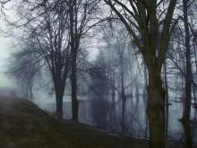 Сонное утро весны.....или история одного места1 / Ветвисто-стволистая графика