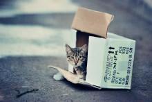 catbox / уличное