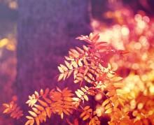 Осенняя фантазия... / Осенняя фантазия...