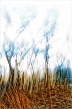 "[ Mystery of the tall Grass ] / ...теперь и Вы знаете ""Тайну высокой Травы"""